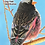 Thumbnail: Birds of New Mexico Reference Field Guide