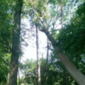 ODYSSEY TREES POST.jpg