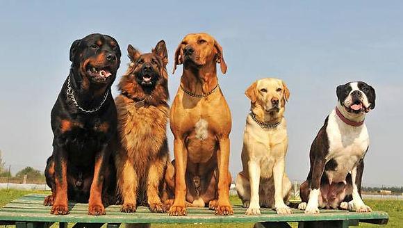 Dog Friendly places near Wheathampstead