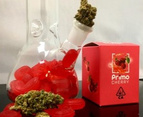 "PHYTOLOGIE IS PROUD TO UNVEIL ""PRIMO CHERRY"" A TYPE II CHEMOVAR THAT OFFERS A 2:1 ratio of THC and C"