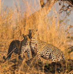 Mukambi-24_2_crop400x400.jpg