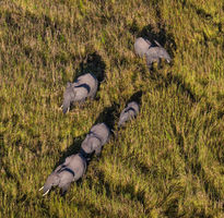 7 Nights with Remote Africa Safaris, Surefoot & Luambe