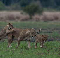 7 Nights in Kafue National Park - Luxury
