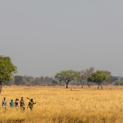 Walking Safari_crop400x400.jpg