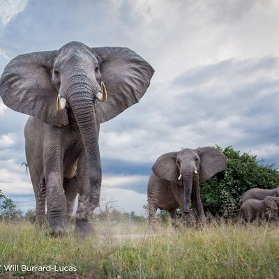 Time  Tide - Norman Carr Safaris17-8_cro