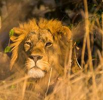7 Night Safari in Kafue National Park