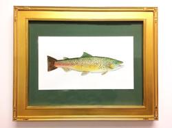 Rainbow Trout_1