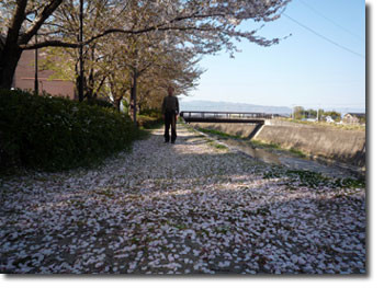甲斐の桜道に立つ武田