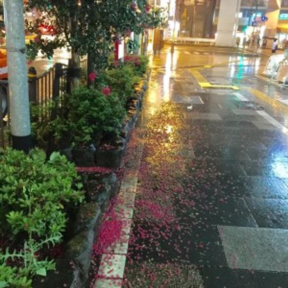2018年8月8日の風雨で、地元浅草通りの歩道には、百日紅の色とりどりの花の絨毯が。