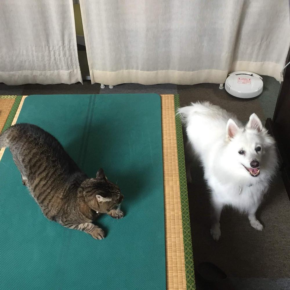 マスコット犬ハリーと猫の寅さん