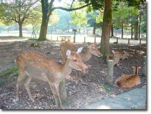 奈良の鹿さん達