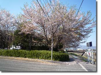 甲府ジュエリーフェア桜並木から覗くアイメッセ山梨