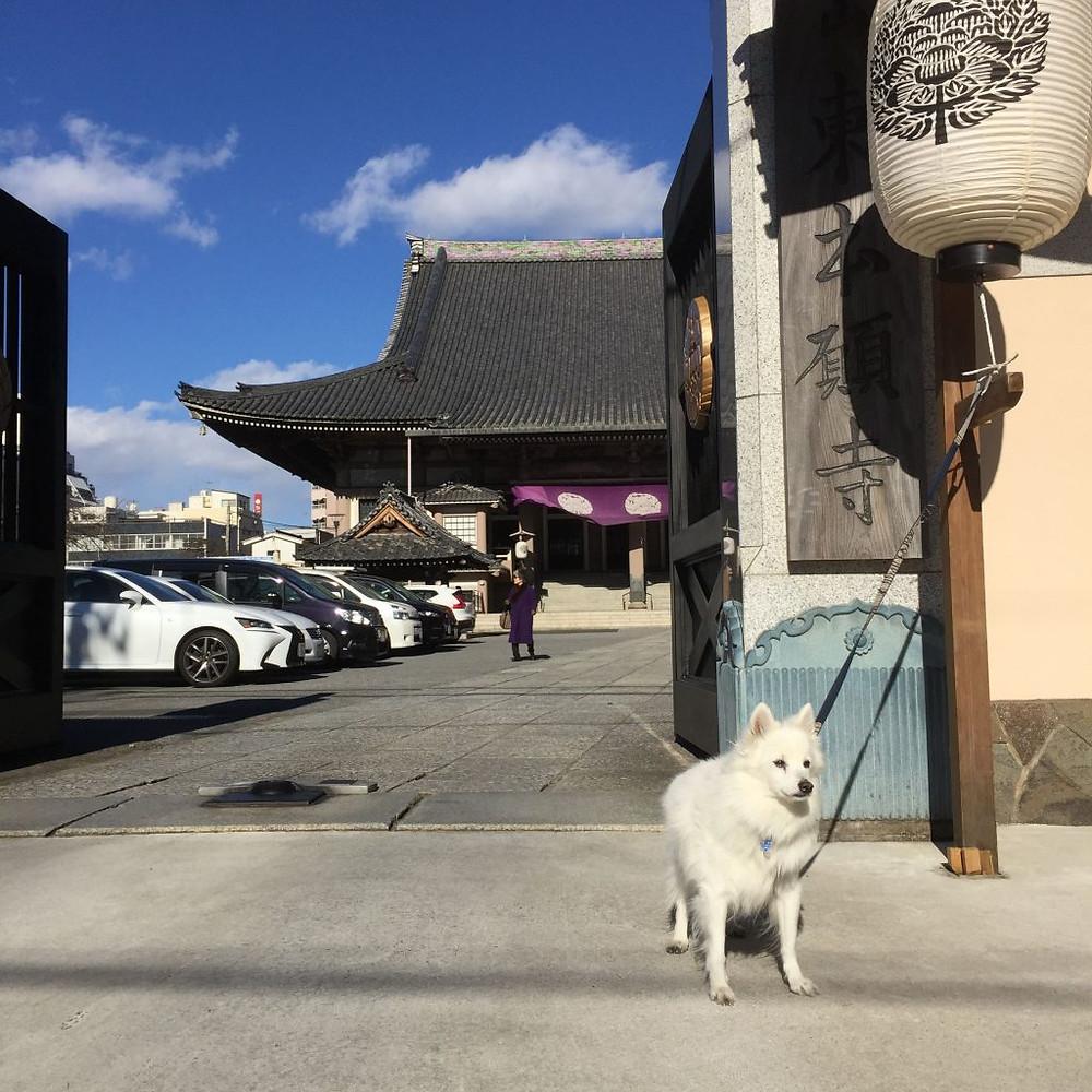 浅草の東本願寺前