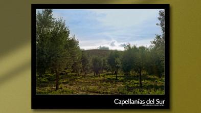 capellanías-del-sur-lounge-creative-pu