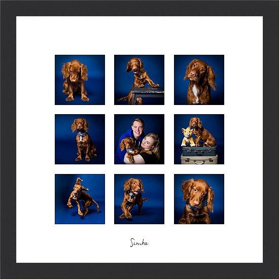 "Paw Print Moments 20x20"" Frame + Photo Shoot"