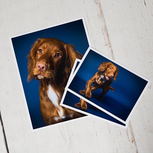 Dog, Puppy or Pet Potrait + Three Prints
