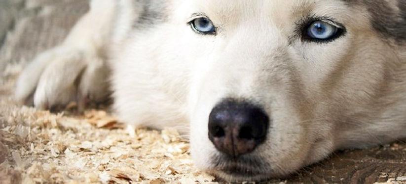 Hund - Kühn Pathologie