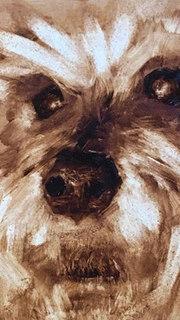 Mazie - The Schnauzer