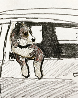 Dog out Window sketch