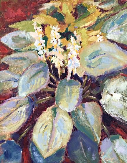 Hosta Blooms