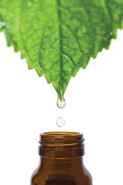 mint_essential_oil_250x376.jpg