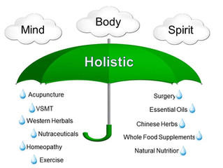 What is a Holistic Veterinarian?
