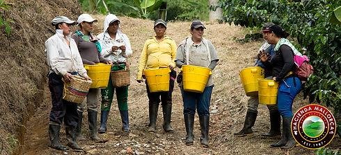 Women Picking Yellow Borbon.jpg