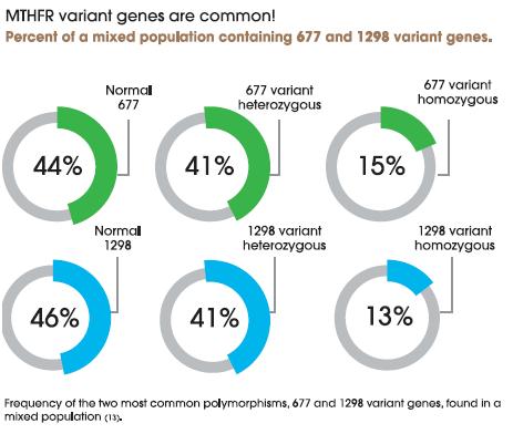 Genes.png