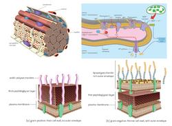 Biological_Illustrations