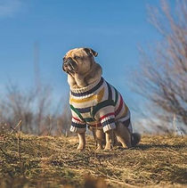 1DogSweater.jpg