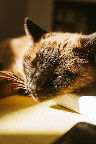 a-sleeping-cat-in-the-sun.jpg