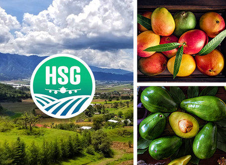 HSG Prepared to Bring Tropical Green Skin Avocados to US