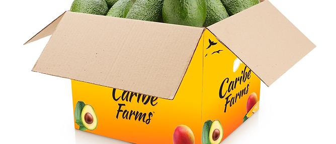 30lbs Tropical Avocados Box