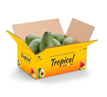 10lb Tropical Avocados Box