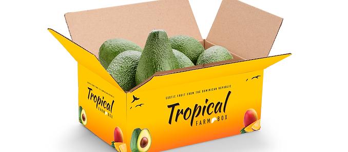 5lb Tropical Avocados Box