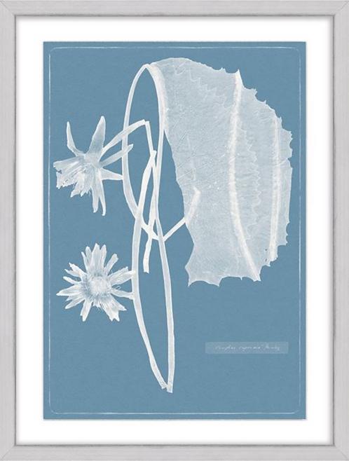 Cyanotype Water Lilies