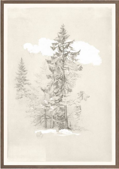 Collection 07 - Tree Drawing