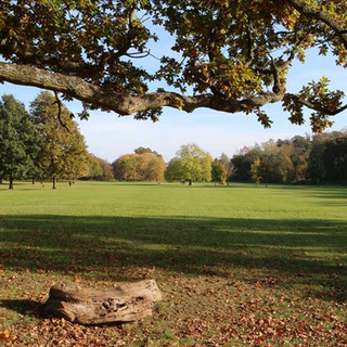Dorridge Park