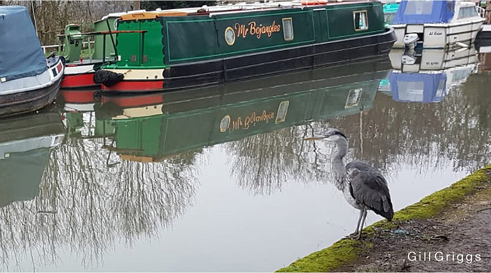 Heron and Barges GeG CROP 980 x 545 2021