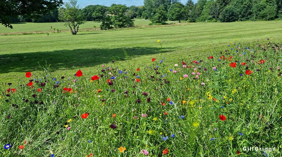 Wildflowers Knowle Park 2 Crop for WS.jpg
