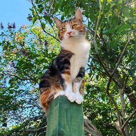 Fitzgeralds Vets Catford Cats.jpg