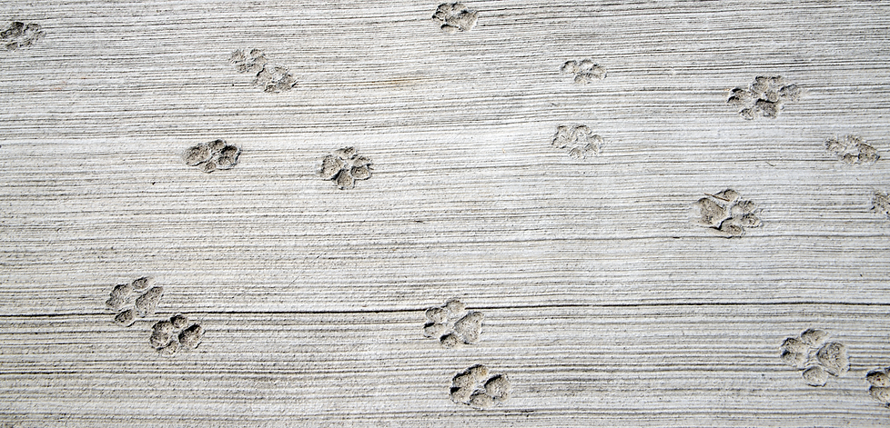 Fitzgeralds Veterinary Care Paw Prints.p