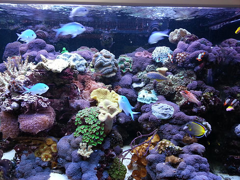 Reef Display at Austin Aqua Dome