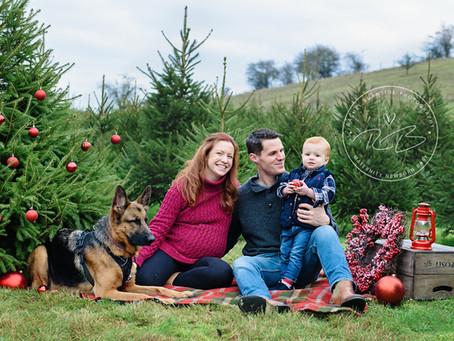 Christmas Tree Farm Maternity Session
