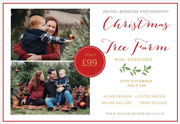 Christmas-Mini-Session-Template christma