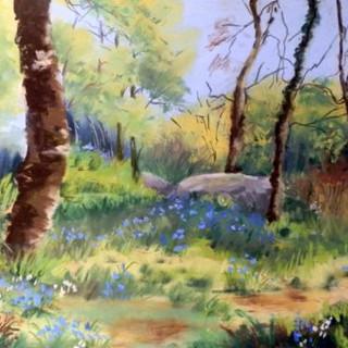 Bluebells at Caherdaniel, Co. Kerry