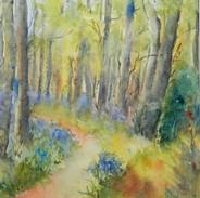 Bluebells at Clogrennan Woods, Carlow