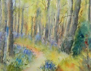 Bluebells in Clogrennan Woods