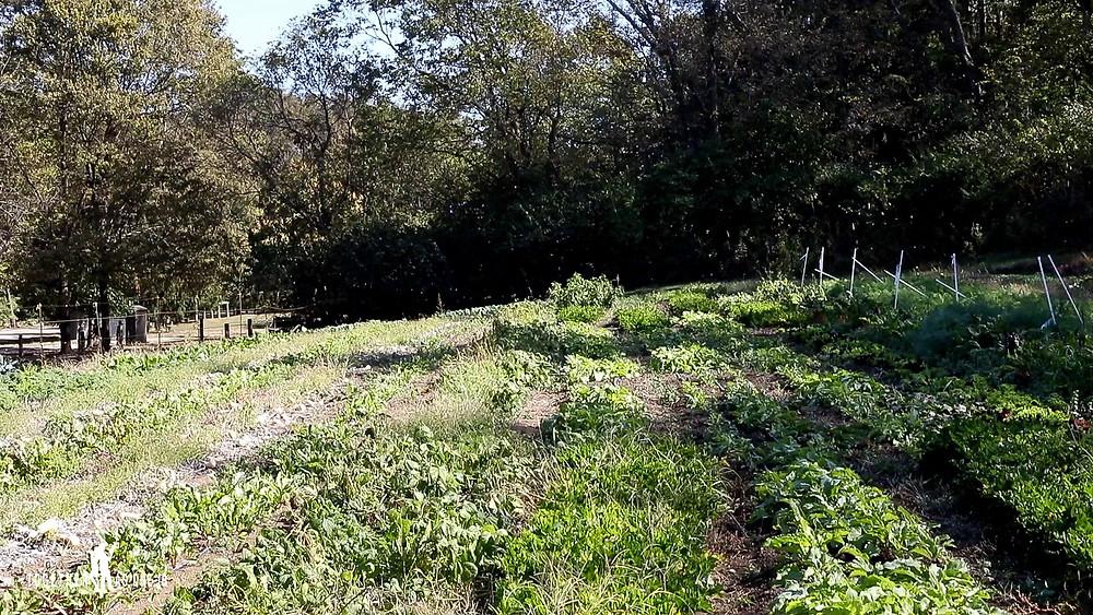 wide photograph of field of garden at Cincinnati local farm