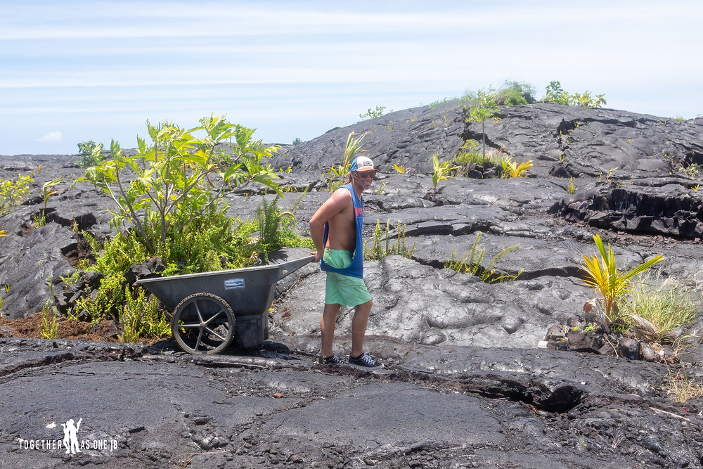 Young man with wheel barrow of mulch working as a volunteer for Center for Getting Things Started at the New Black Sand Beach at Big Island, Hawaii